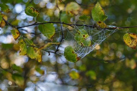 spiderweb Spinnennetz Kunschke  autumn fall