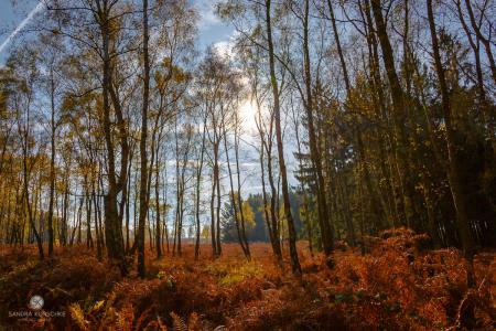 Naturschutzgebiet Struffelt Struffeltroute Heidegebiet Herbst autumn fall Eifelsteig Kunschke