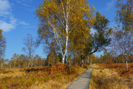 Naturschutzgebiet Struffelt Struffeltroute Heidegebiet Herbst autumn fall Eifelsteig